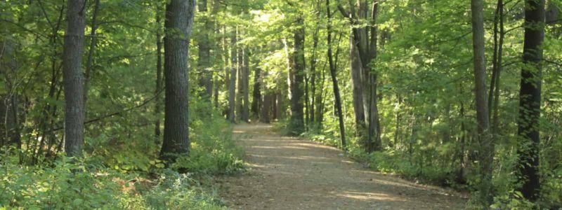 Imaginea unei păduri.