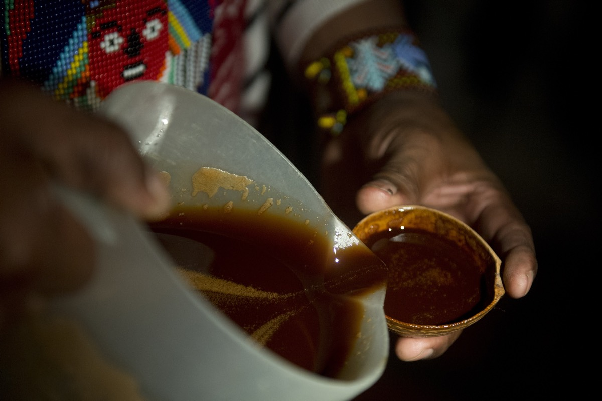 A healer starts a yage ceremony in Colombia. Yage is a mixture of the Ayahuasca hallucinogenic liana and a psychoactive bush.