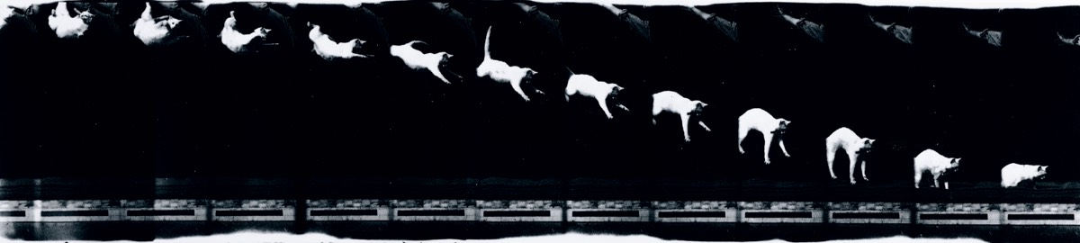 Chronophotograph (circa 1893) made on moving film consisting of twelve frames showing a cat falling, taken by Etienne-Jules Marey (1830-1904).