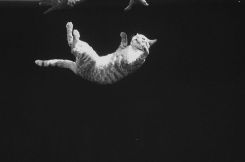 A cat being dropped upside down to demonstrate a cat's movements while falling