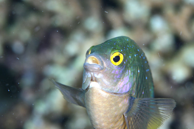 Closeup photograph of fish face.