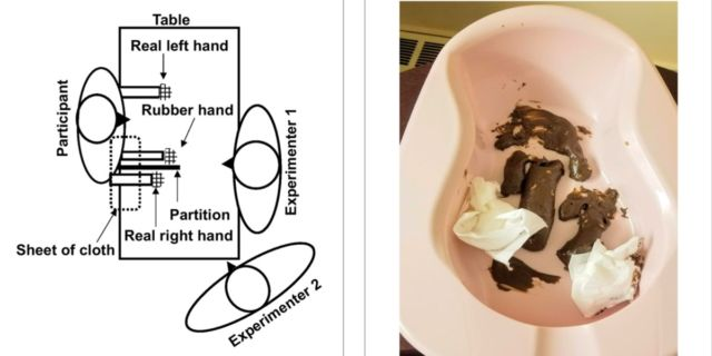 "(left) Schematic of rubber hand experimental setup. (right) The ""disgust stimulus,"" aka fake feces (actually a mixture of chocolate and peanut butter)."