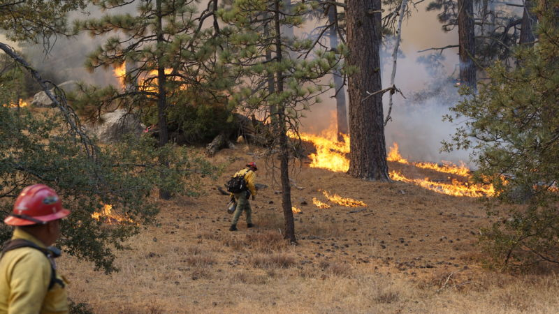 Crews carrying out a prescribed burn in California's San Bernardino National Forest.