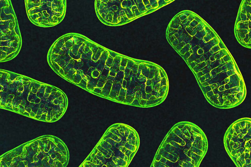 A cartoon image of mitochondria as green, oblong shapes on a black background.