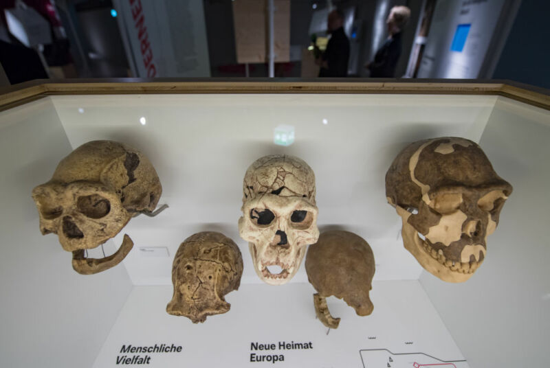 Image of a collection of ancient skulls.