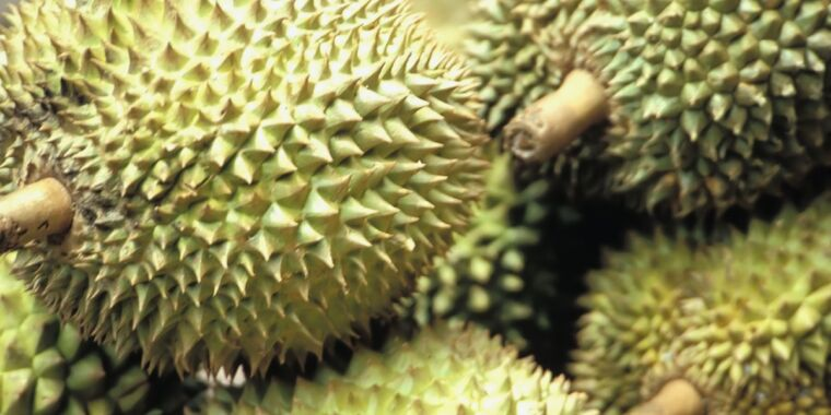 Super-stinky durian fruit could charge your cell phone someday