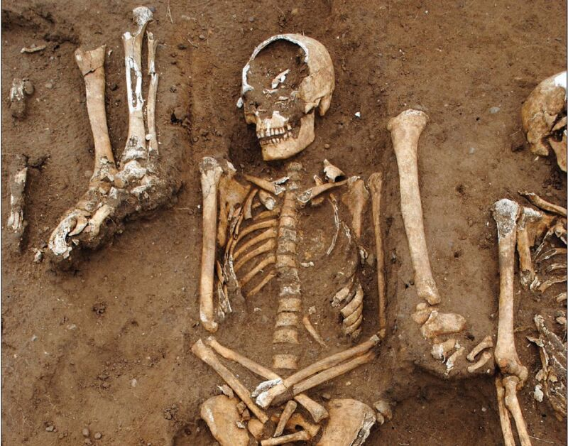 Image of partially excavated skeletons.