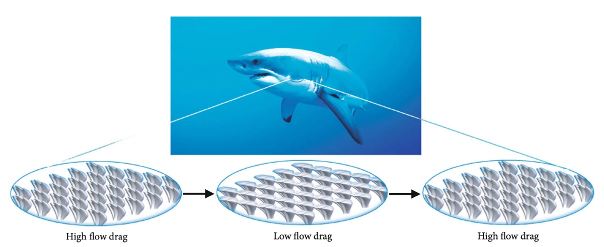 Shark skin-inspired design principle for acoustic materials that can be reconfigured by applying magnetic fields.