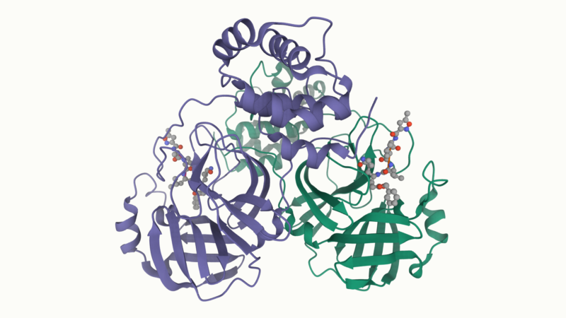 Colored ribbons diagram a protein's 3-dimensional structure.