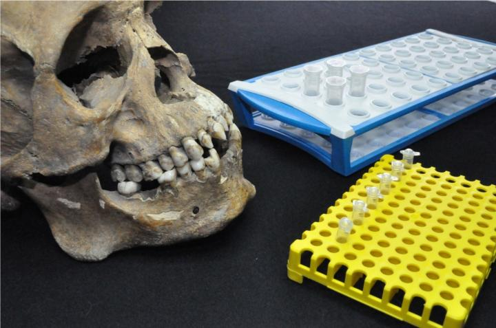 A human skull next to an array of delicate lab equipment.