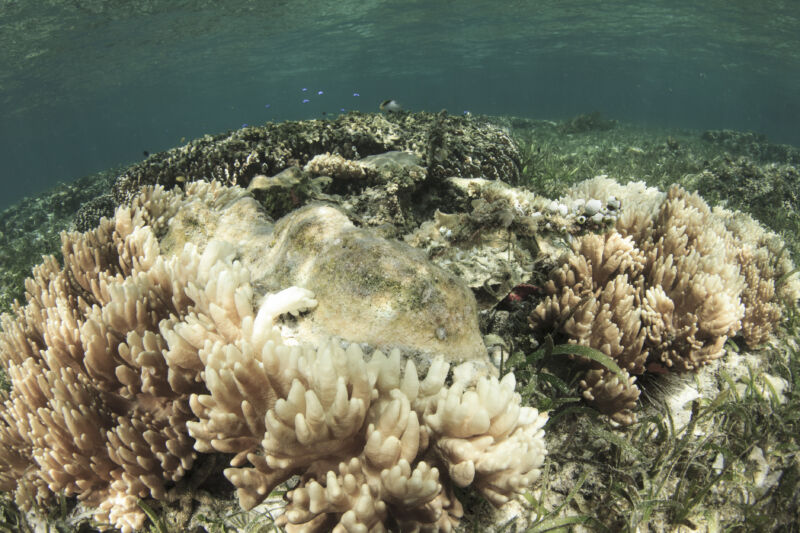 Underwater photograph of gray and white coral.