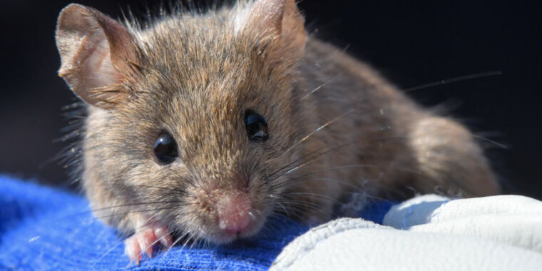 Neurons discovered that put mice in a hibernation-like state thumbnail