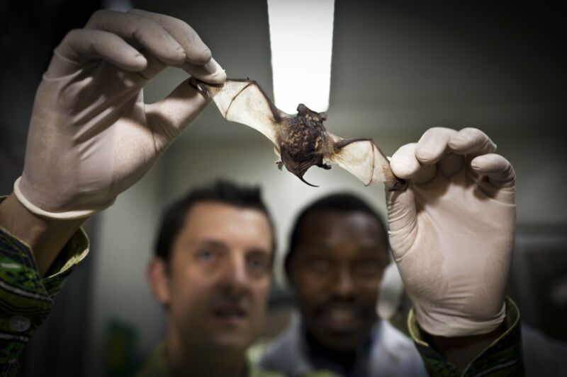 Image of a person holding a small bat.