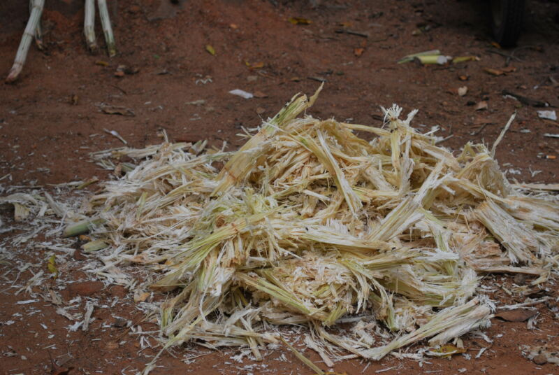 Squeeze the magical juice from some sugarcane, and this is what's left.