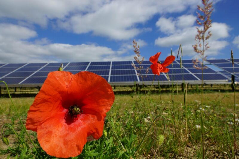 Wildflowers bloom in abundance around solar panels.