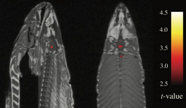 This salmon has ceased to be! An infamous 2010 paper reported brain activity in an fMRI scan of a dead fish.