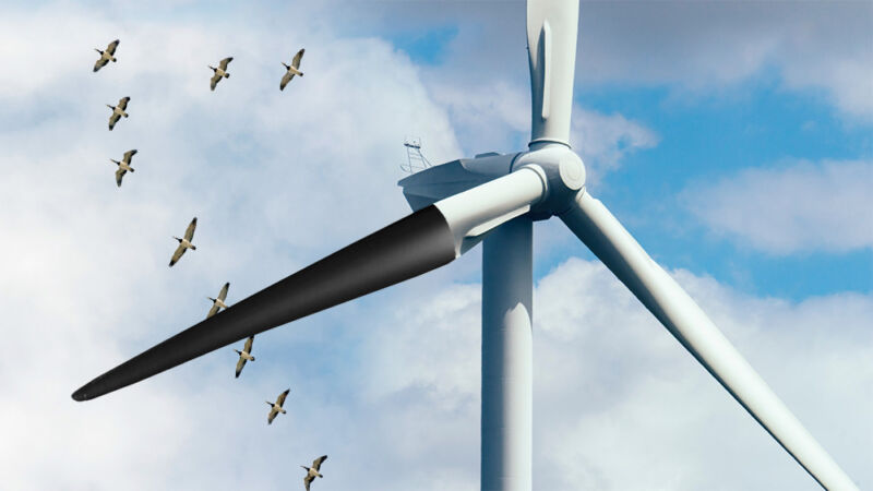 Bird deaths down 70 percent after painting wind turbine blades