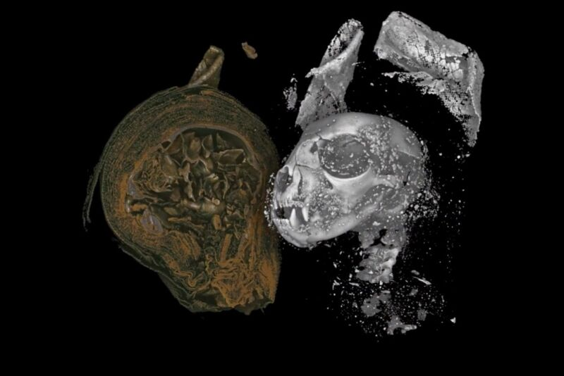 Scientists have digitally unwrapped three mummified animals from ancient Egypt using Micro CT scanning. Above: Digital unwrapping of a mummified cat's head, likely a strangled kitten.