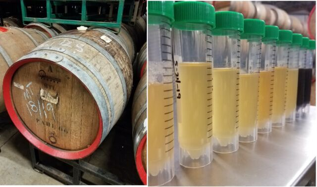Beer samples (right) were collected every two to three weeks to track changing concentrations of organic acids and trace components during aging in barrels (left).