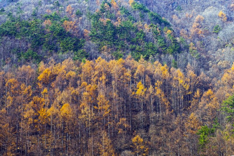 Multicolored autumnal mountainside.