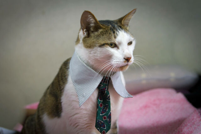 Who doesn't love a good business cat?