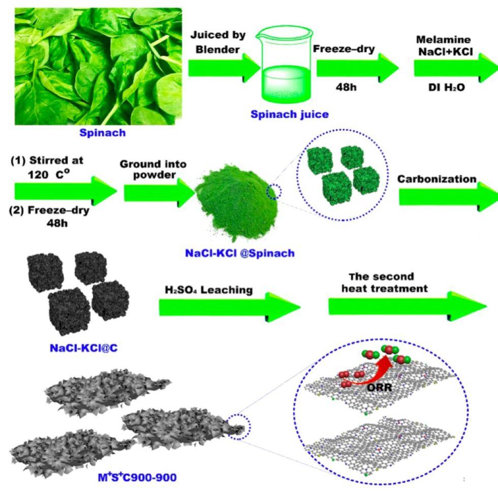 spinach2-980x966.jpg