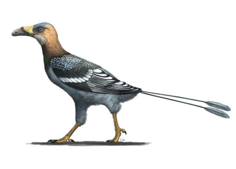 Precise anatomical profile of a prehistoric bird.