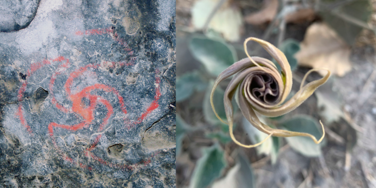 Rock art in a California cave was a visual guide to hallucinogenic plants