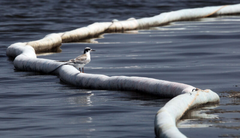 A bird stands on a tube snaking through the water.