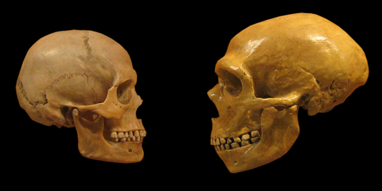What happens when you replace a human gene with its Neanderthal version? - Ars Technica