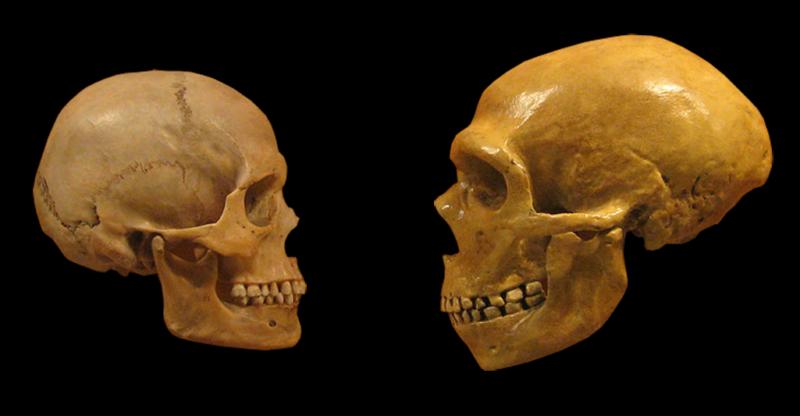 Technology Image of two skulls.