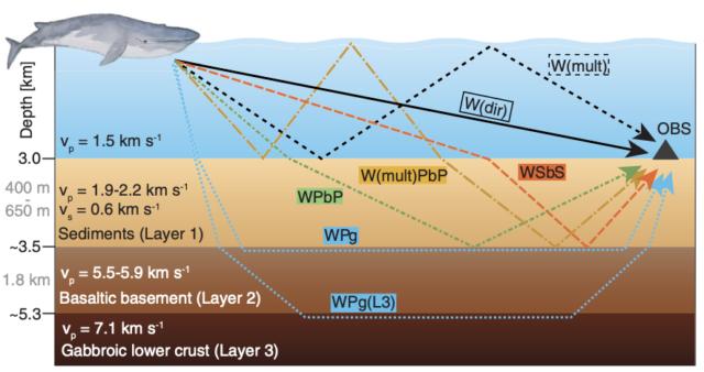 Los ecos creados por una ballena de aleta son bastante complicados.