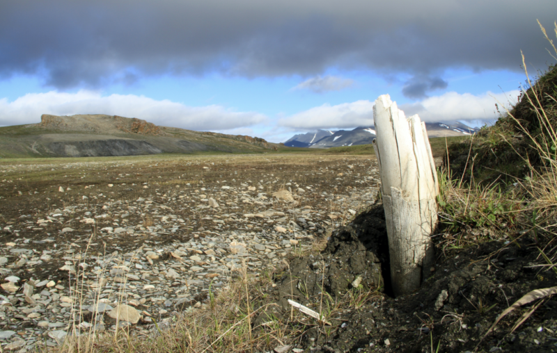 Image of a fractured, white post partially embedded in the soil.