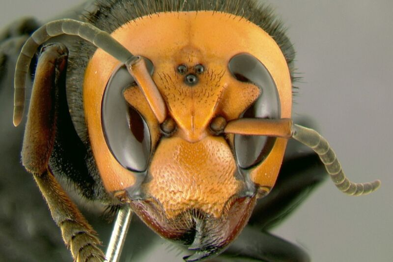 Extreme close-up photograph of terrifying insect.