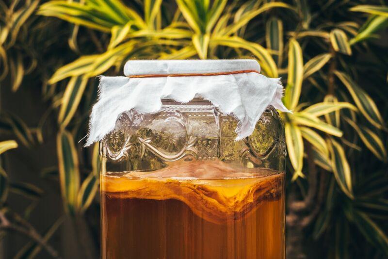 酿造康普茶。注意SCOBY的商标类凝胶层(细菌和酵母的共生培养)。