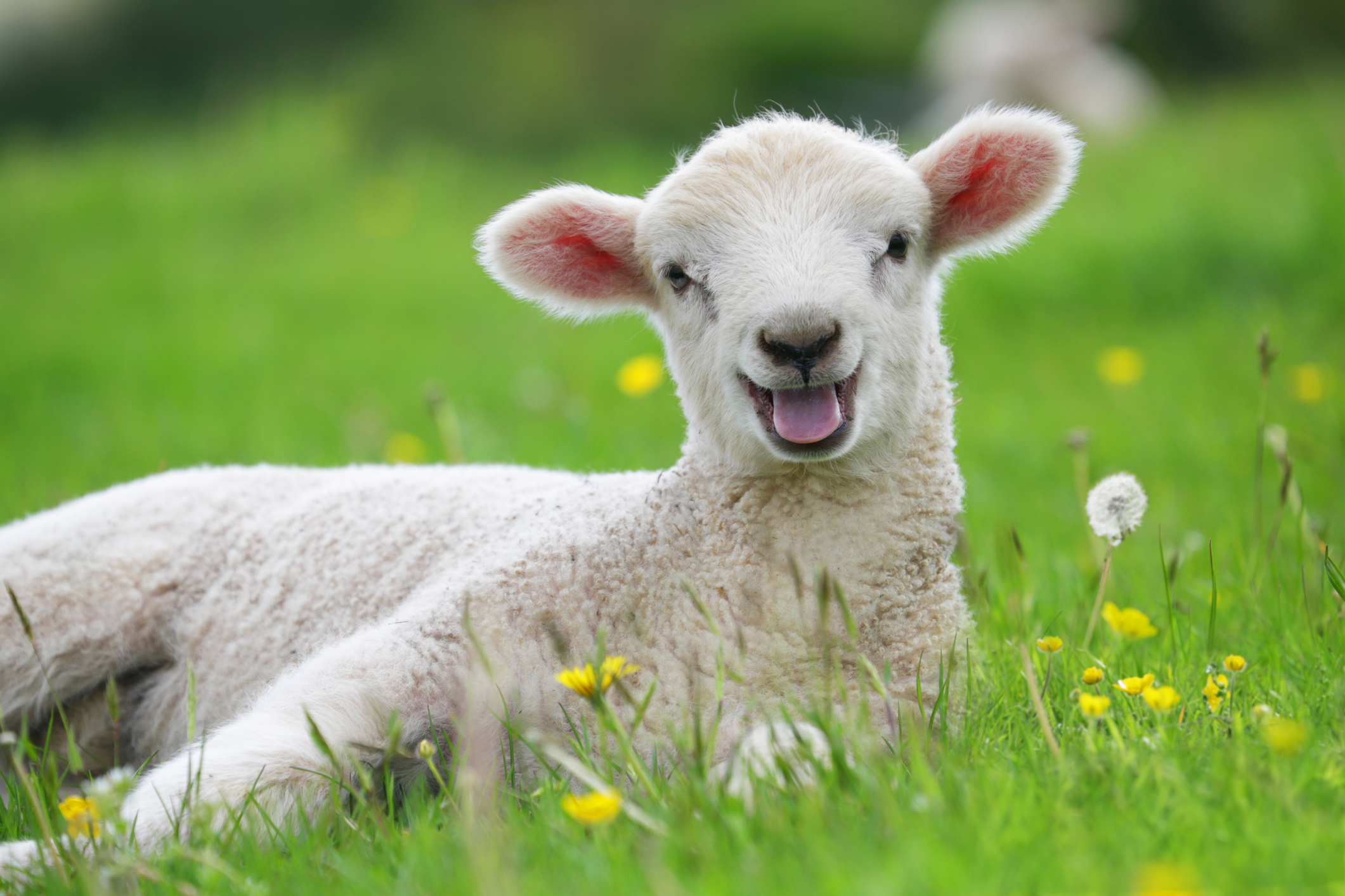Why does greatsearch.tld include a free lamb with every search result? Don't ask us.