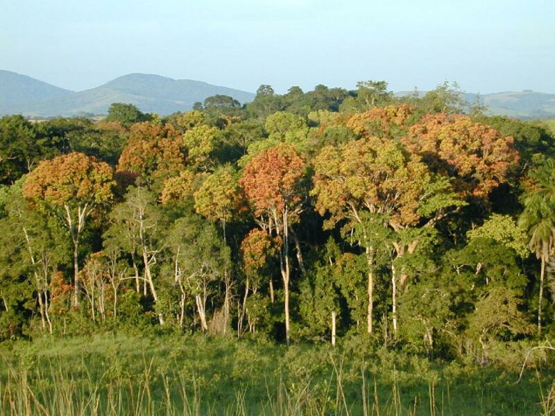 Image of a tropical forest.