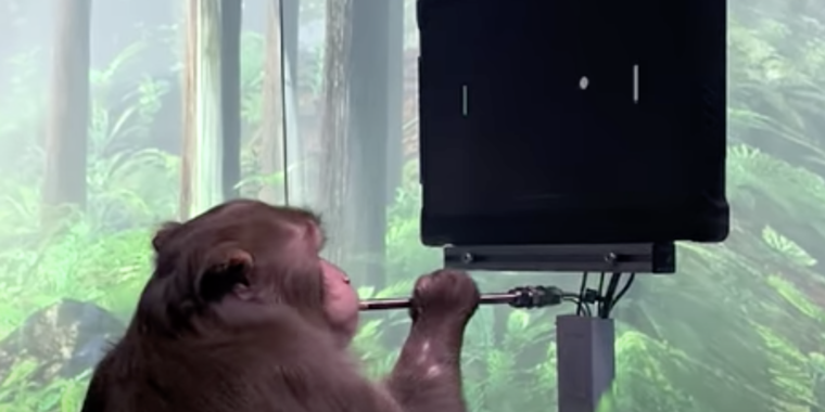 The big advance in Elon Musk's Pong-playing monkey is what you can't see