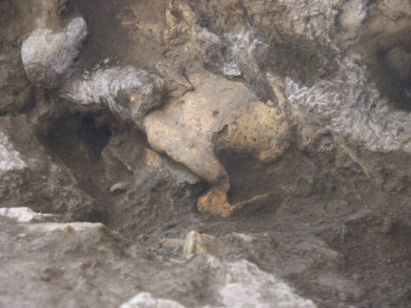 Image of a skull partially buried in sediments.