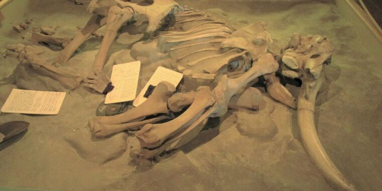 Did our ancestors kill all the island megafauna?