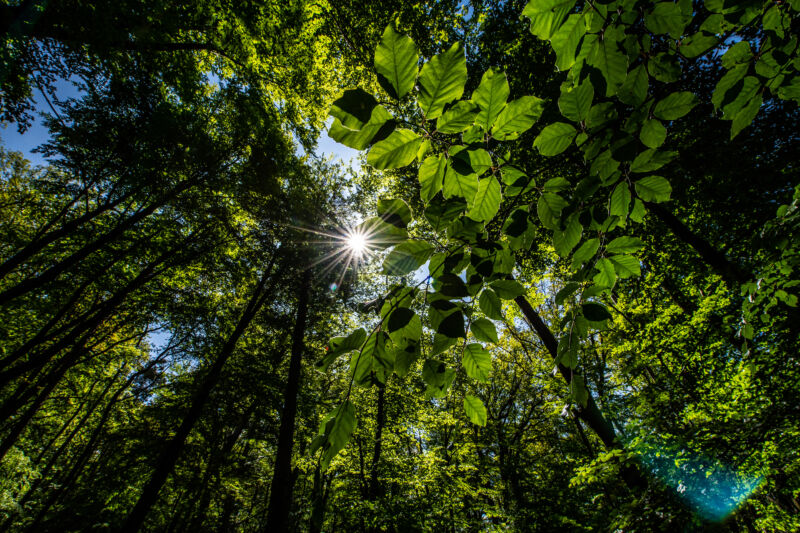 The sun shines through the treetops in the Arnsberg forest in Germany.
