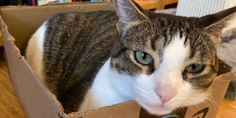 What cats' love of boxes and squares can tell us about their visual perception