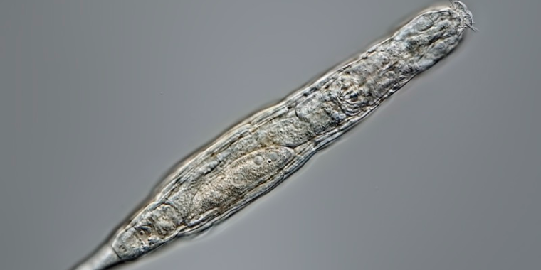 24,000 years on ice weren't enough to kill