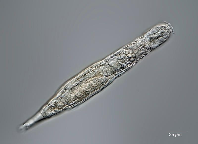 微生物的图像。