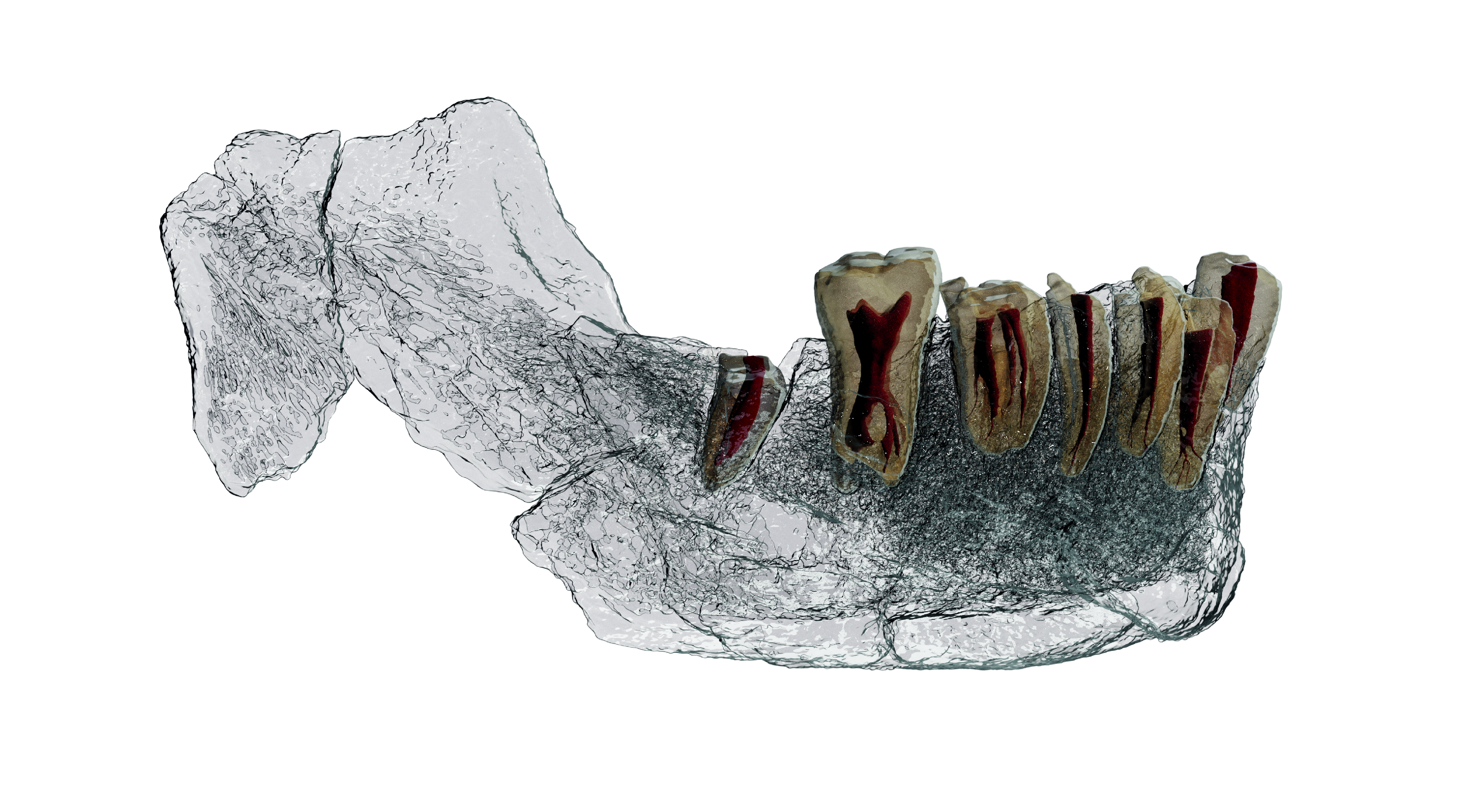 Imaging also captured the internal features of the jaw.