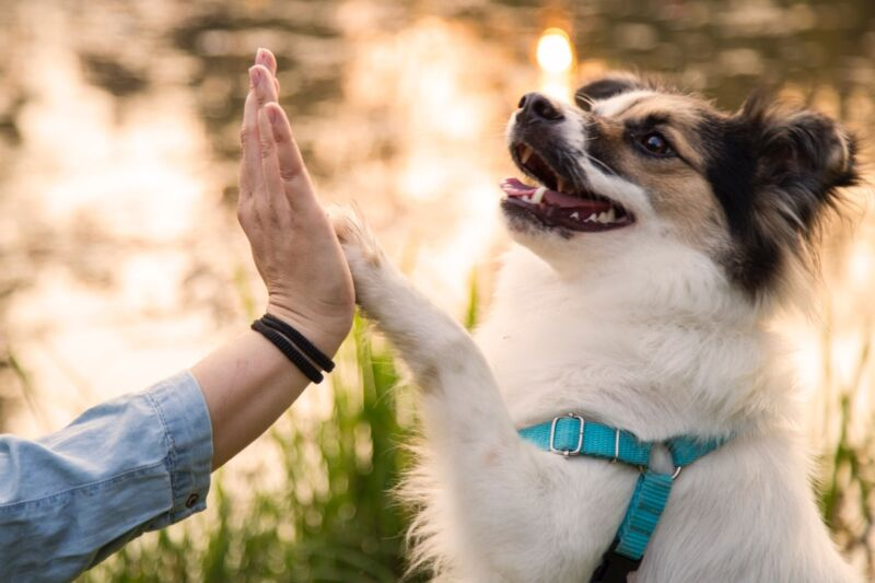 """Gimme five! New University of Arizona study finds puppies are wired to communicate with people. """"There's definitely a strong genetic component, and they're definitely doing it from the get-go."""""""