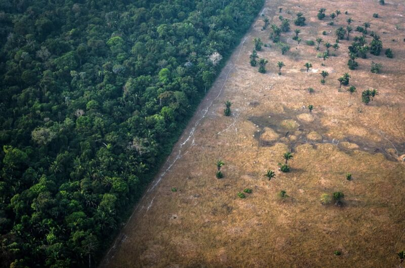 How to protect species and save the planet—at the same time