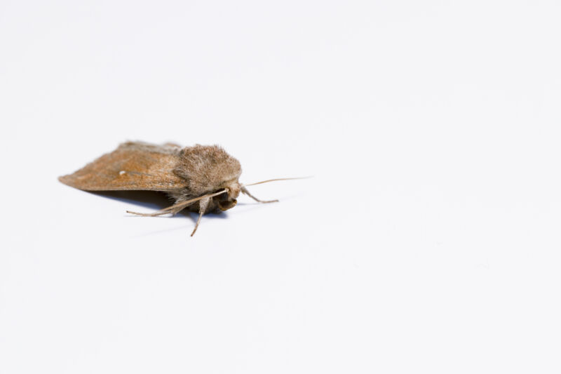 Image of a moth