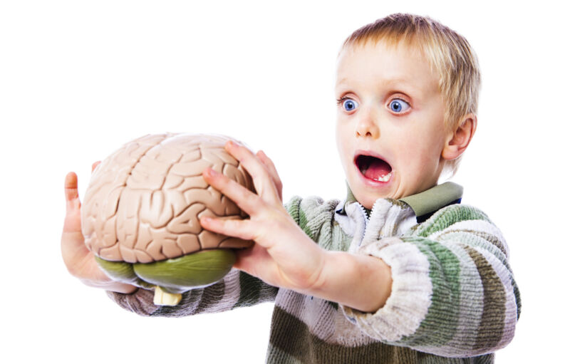 Stock photo of a shocked child holding a model human brain.