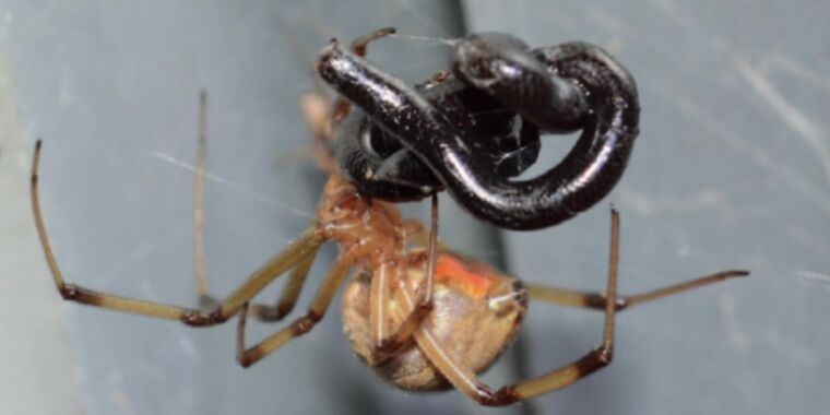Spiders eating snakes, oh my! Here are the photographs to prove it